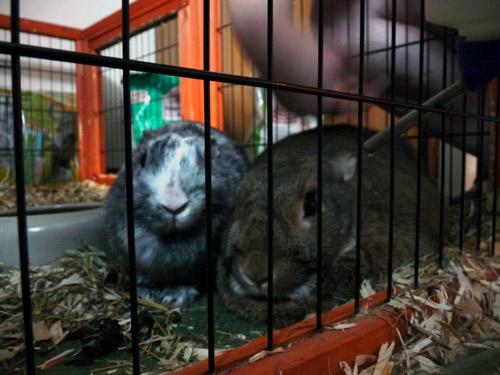 image: bunnies